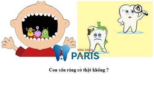 Cách bắt sâu răng bằng lá tía tô có Thực Sự hiệu quả ko? [BS tư vấn] 2